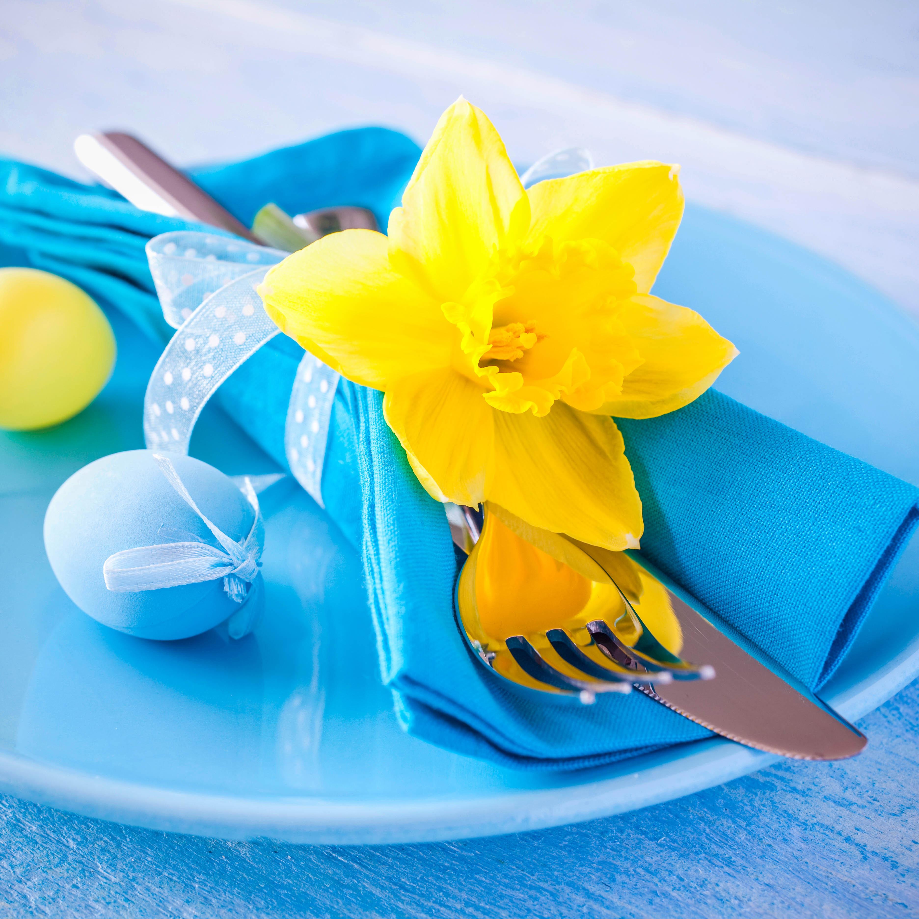 Daffodil on a plate