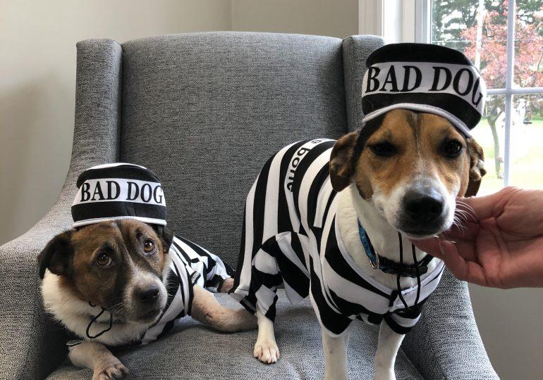 Jail & Bail
