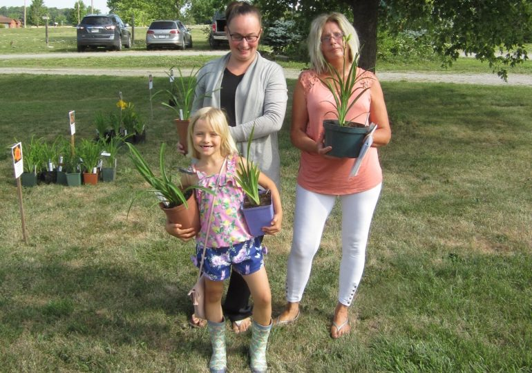 Cottonwood Daylily Sale a huge success