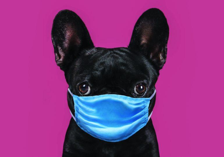 Have your say: Should masks be mandatory?