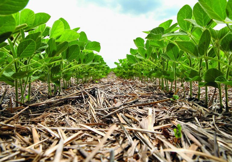 5 ways farmers can manage carbon