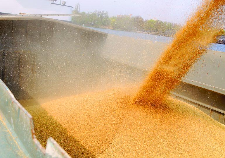 Grain dust: An underrated health risk