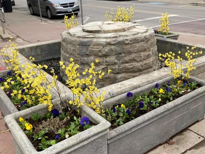 Dunnville Horticultural Society gets planting