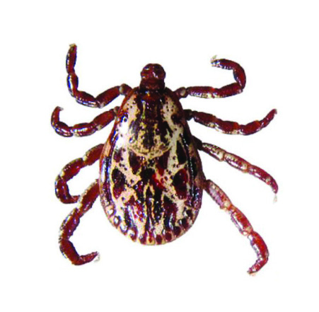 Stay tick safe this summer